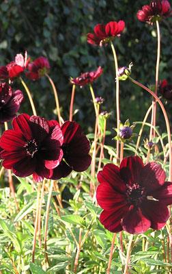 arnes blommor kolbäck